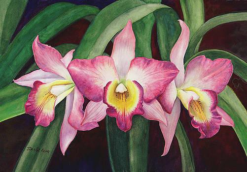 Orchid Trio by Tara D Kemp