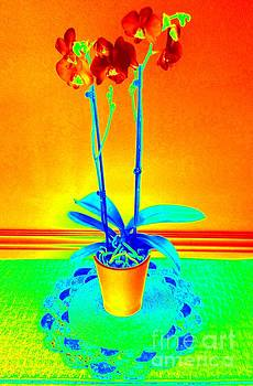 Heat Map Orchids 1 by Richard W Linford