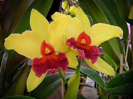 Dora Miller - Orchids 2