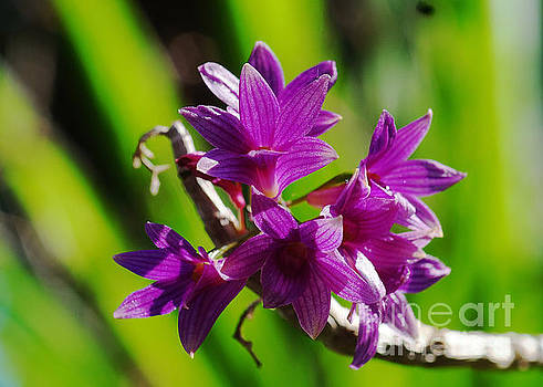 Orchids 255 by Rudi Prott