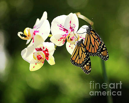 Orchids and Butterflies Photo by Luana K Perez