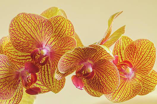 Orchids by Bob Grabowski