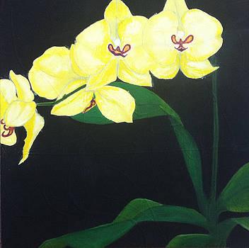 Orchids by Elizabeth  Bogard