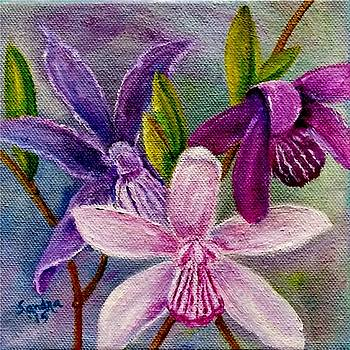 Orchids in Color by Sandra Maddox