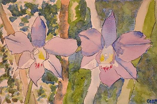 Orchids by James Cox