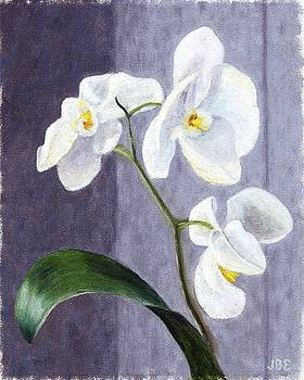 Orchids by Jean Ehler