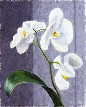Jean Ehler - Orchids