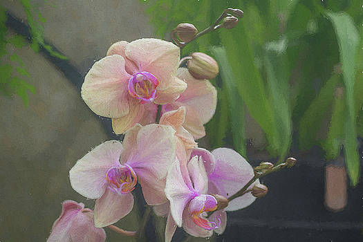 Orchids by Jeff Oates Photography