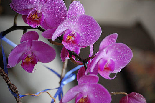 Orchids by Kevin Stevens
