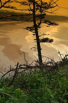 Oregon Coast OO44 by Mary Gaines