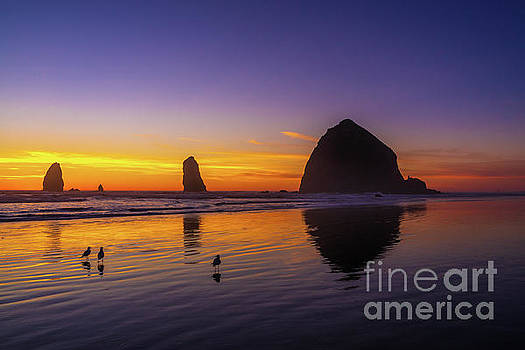 Oregon Coast Three Little Birds by Mike Reid