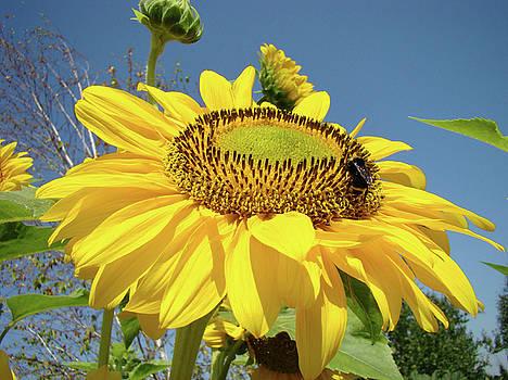 Baslee Troutman - OREGON GARDENS Silverton SUNFLOWER Honeybee Baslee