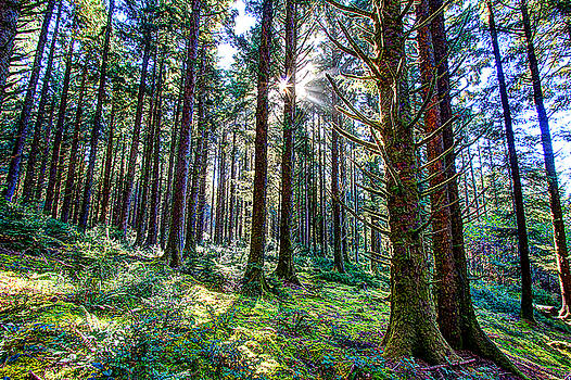 Oregon Rainforest by David Rigg