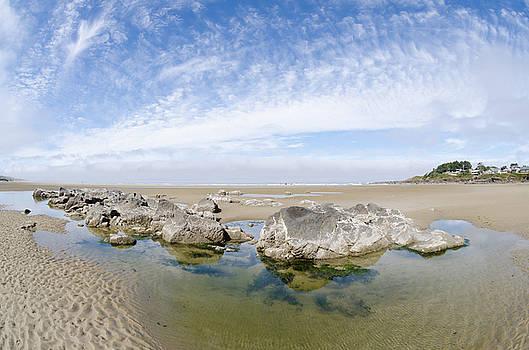 Margaret Pitcher - Oregon Tide Pool