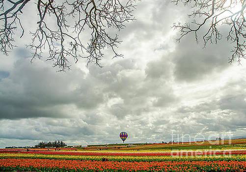 Oregon Tulip Fields by Nick Boren