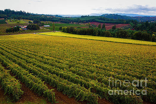 Jon Burch Photography - Oregon Wine