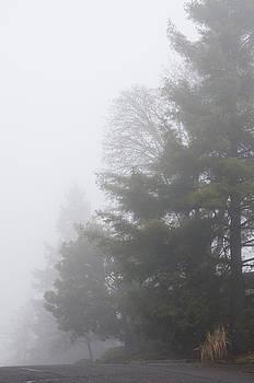 Margaret Pitcher - Oregon Winter