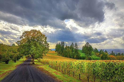 Oregon's Vineyard in Willamette Valley  by Karmen Chow