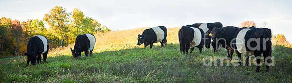 Oreos - Milk Included by Carol Lynn Coronios