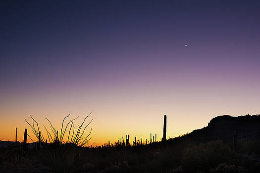 Organ Pipe Cactus National Monument Sunset by Steve Gadomski