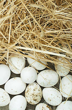 Organic white domestic eggs and straw by Deyan Georgiev