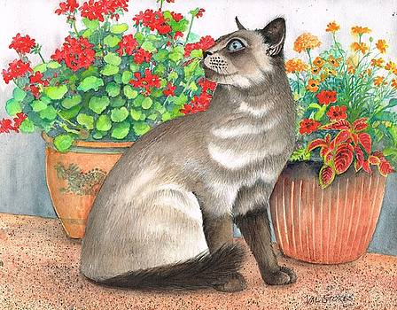 Oriental cat by Val Stokes