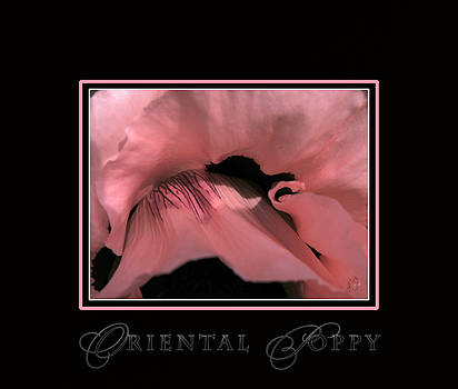 Oriental Poppy - In The Pink by Patricia Whitaker