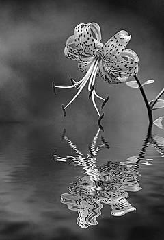 Oriental Tiger Lily - Reflection bw by Steve Harrington