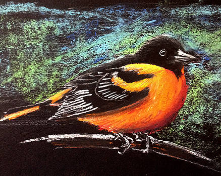 Oriole by Holly Whiting