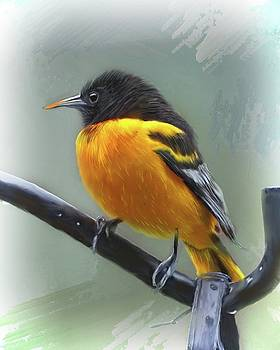 Oriole by Mary Timman