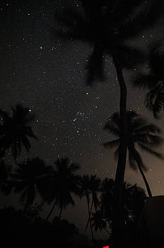 Orion Framed by Palms by Jonathan Sabin