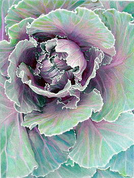 Ornamental Cabbage by Bonnie Haversat