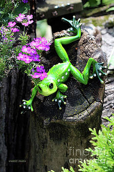 Corey Ford - Ornamental Green Frog