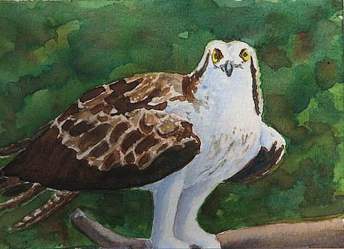 Osprey - Miniature by Libby  Cagle