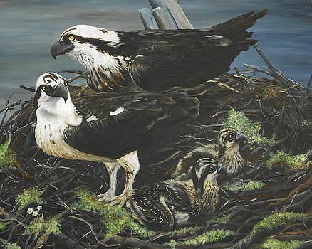 Osprey Family by Christine StPierre