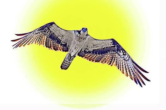 Osprey - I Am Watching You by Steve Harrington