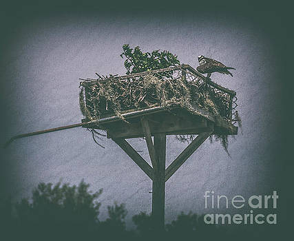 Osprey Nest by Dale Powell