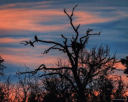 Osprey Sunset Silhouette at Gulf Island National Seashore by Deb Henman