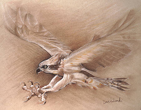 Osprey - Wildlife Drawing by Dave Kobrenski