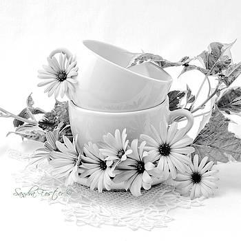 Sandra Foster - Osteospernum Daisy Flowers Still Life