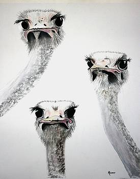 Ostrich Curiosity by Michele Turney