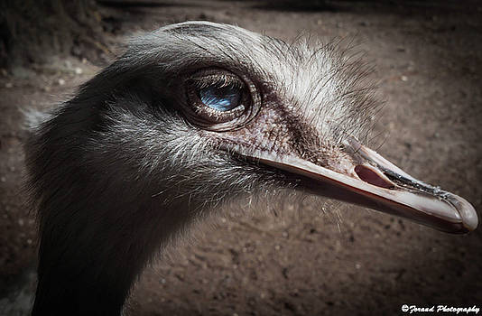 Ostrich by Debra Forand