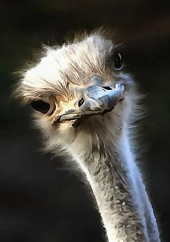 Tracey Harrington-Simpson - Ostrich Head