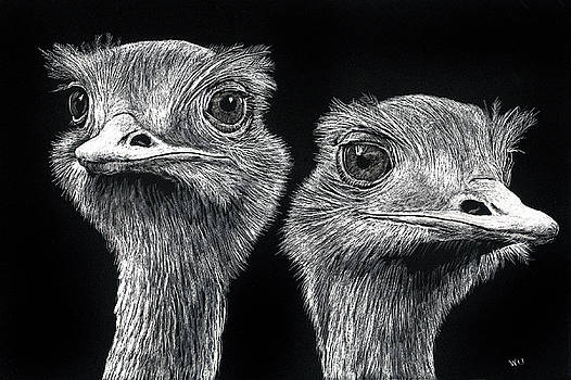 Ostrich Pair by William Underwood