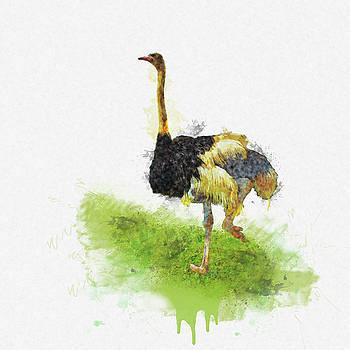 Ostrich - Watercolor by Tatiana Tyumeneva