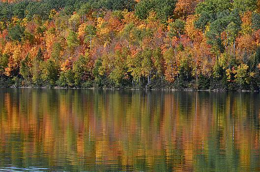 Ottawa National Forest by Dan Hefle