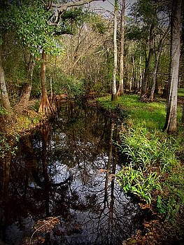 Otter Creek by Phil Penne