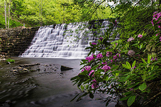 Otter Creek Rhododendron by Steve Hammer