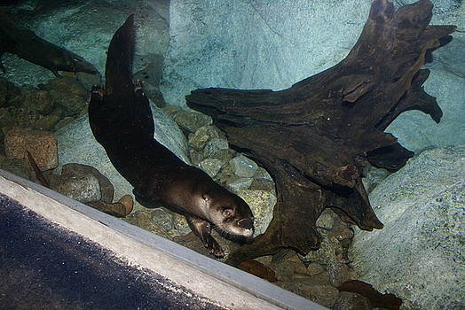 Otter by Jamie Williams