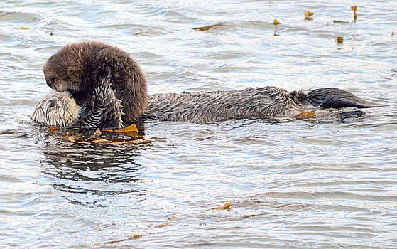 Otter Love by AJ Schibig